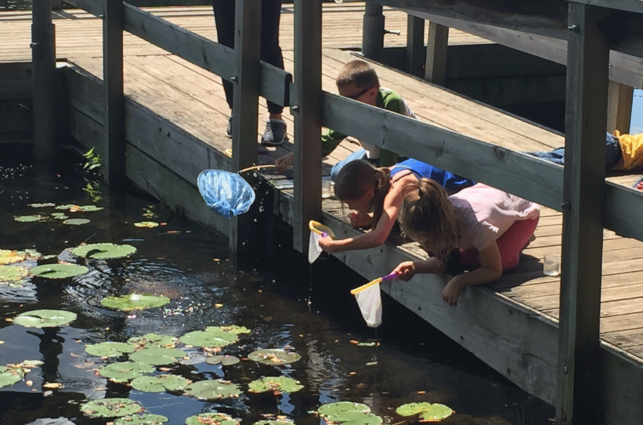 Several children on a bridge lean over a lily-pad pond with nets